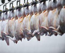 Україна та ЄС використали основні тарифні квоти на експорт курятини