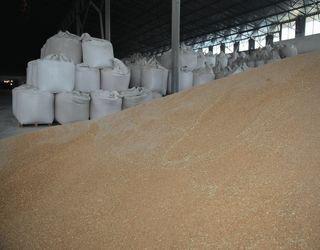 Держрезерв виставив на аукціон зерна більше, ніж на 19 млн гривень