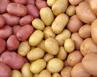 Виробництво картоплі в Україні зросло на 31%