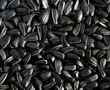 В Україні зріс попит на імпортне насіння високоолеїнового соняшника