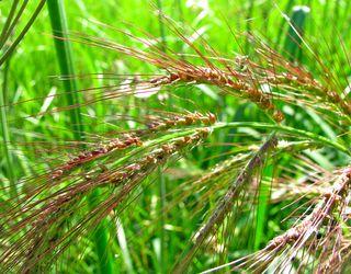 Найвищу врожайність зернових зафіксовано на Вінничині ‒ 55,4 ц/га