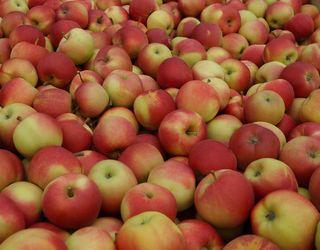 Ціна на українські яблука в 1,5-2 рази нижча за минулорічну