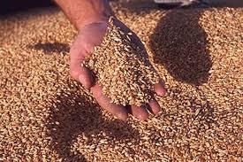 Експортні поставки зерна з України перевищили 7,2 млн тонн