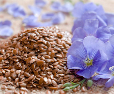 Пропозиція насіння льону на світовому ринку не задовольняє попит