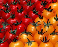 Українські томати готують на експорт до Польщі: ціна дуже приваблива