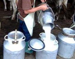 Виробництво молока в Україні впало на 2%