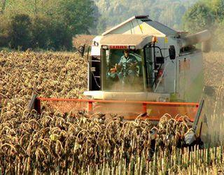 «Астарта» зібрала 40% врожаю соняшнику з підвищеною врожайністю