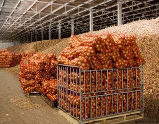 Найближчими роками в Україні планують збудувати овочесховищ на 400 тис. тонн