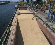 У торгових портах вилучили понад 500 тонн сільгосппродукції, яку експортували за сфальшофаними документами