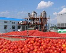 15 млн дол. на будівництво заводу з переробки томатів