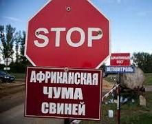 Африканська чума свиней: на території Новоушицького району встановлено 5 санітарних постів