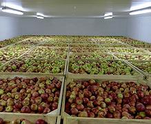 Ціни на яблука зростуть