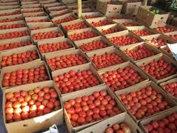 Різке зростання оптової ціни на томат спостережено вКиєві й Одесі