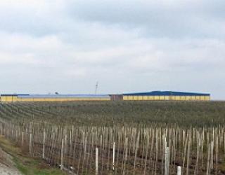 На Тернопільщині відкриють другу чергу потужного фруктосховища