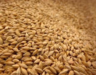 Бангладеш і Йорданія скасовують тендер на закупівлю пшениці