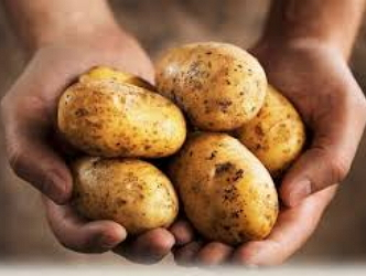 Що відбувається з картоплею?