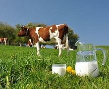 Найважливіше в якості молока — якість молока на фермі