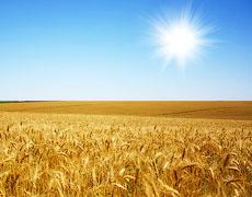 «Чорна п'ятниця» для аграріїв, чи Навіщо потім переплачувати?