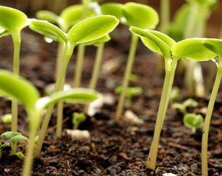 Неможливість сертифікації насіння загрожує проведенню весняної посівної