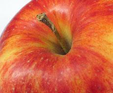ФГ «Гадз» почало експорт яблук до країн Європи та Азії