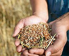 2016/2017 маркетинговий рік може стати рекордним для ДПЗКУ у заготівлі зернових