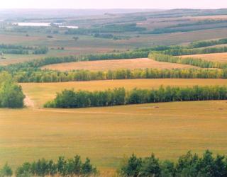Херсонська ОДА занепокоєна станом полезахисних лісових смуг та просить внести зміни до Земельного кодексу України