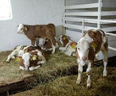 На Вінничині відкрили молочний кооператив
