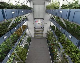 Стартап-проект LED-ферми: рослини під світлодіодними лампами і наглядом датчиків