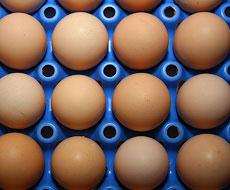 Експорт яєць з України зменшився на 14,5%