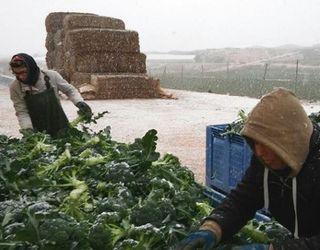 Надзвичайне похолодання на півдні Європи вдарило по тепличним овочам