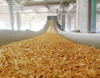 Група «Прометей» експортувала більше половини зернових і олійних