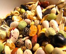 Уряд оприлюднив порядок сертифікації насіння