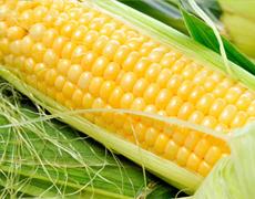 Прогноз імпорту кукурудзи до Китаю знижено удвічі
