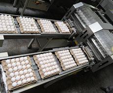 Продаємо більше яєць, однак ціна на них дешевша