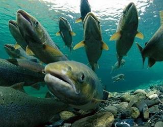 На Полтавщині роблять ставку на рибництво