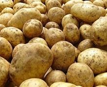 Виробництво картоплі у минулому році зросло на 4,4%
