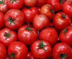 Україна вибрала квоту на безмитний експорт оброблених томатів