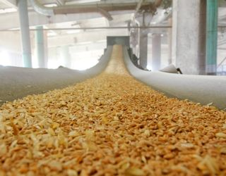 ДПЗКУ в сезоні-2016/17 заготовила близко 2,7 млн тонн зернових