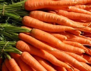 В Україні відчувається брак ранньої моркви