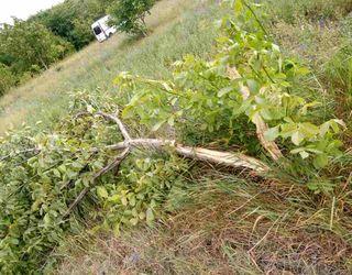 Негода пошкодила сади і врожай у кількох областях України