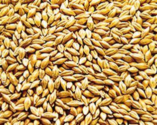 З початку 2017/18 МР Україна відправила на експорт понад 1,2 млн тонн зерна