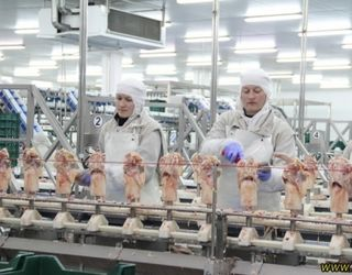 Делегація з Гонконгу вивчає можливості України щодо експорту продукції птахівництва