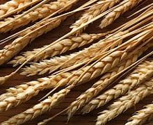 Китай у 1,5 рази збільшив імпорт пшениці