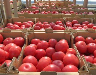 КЕМЗ поставив Agrofusion унікальне оснащення для перевезення томатів