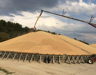 Прогнози цьогорічного врожаю зернових коливаються від 60 до 63,7 млн тонн
