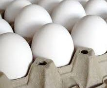 Заражені фіпронілом яйця також виявили у Франції й Великій Британії