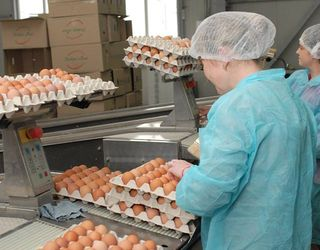 Вітчизняні виробники не скористаються з «яєчної» кризи в Європі
