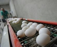 Єврокомісія назвала країни, яких зачепила «яєчна» криза