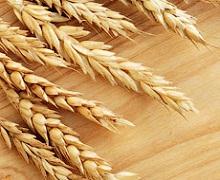 На Одещині зібрали найбільший серед областей урожай ранніх зернових