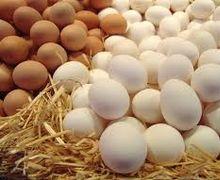 За січень-липень Україна наростила виробництво яєць на 0,9%